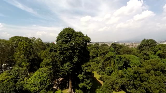 bogor botanical gardens, aerial view, going up - botanical garden stock videos & royalty-free footage