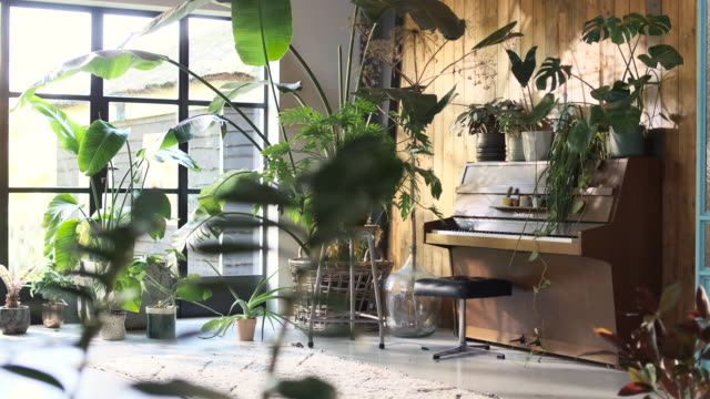 bohemian scandinavian interior with many green plants. nature inside the living room. - elegance stock videos & royalty-free footage