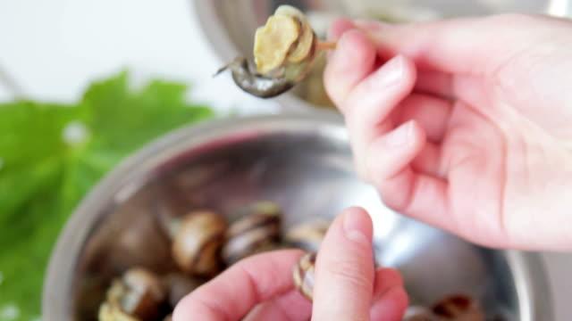 boiled snails, closeup