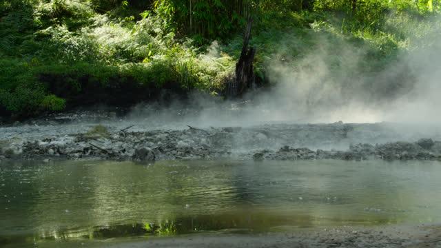 boiling water in thermal spring, sulawesi. - tropiskt träd bildbanksvideor och videomaterial från bakom kulisserna