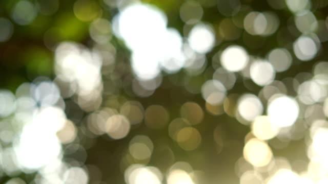 bokeh abstrakt träd bakgrund