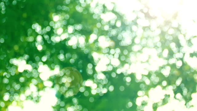 bokeh in sunny forest - lush stock videos & royalty-free footage