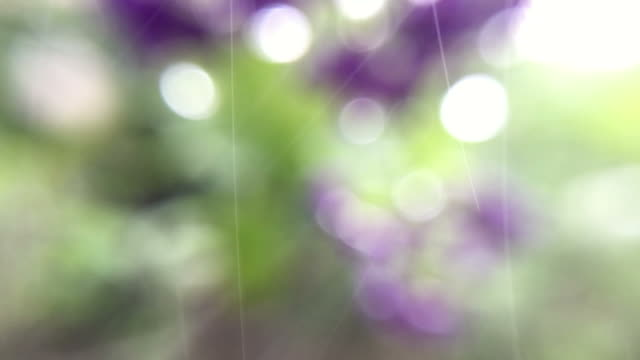 bokeh lights background from dew and flower - morning dew stock videos & royalty-free footage