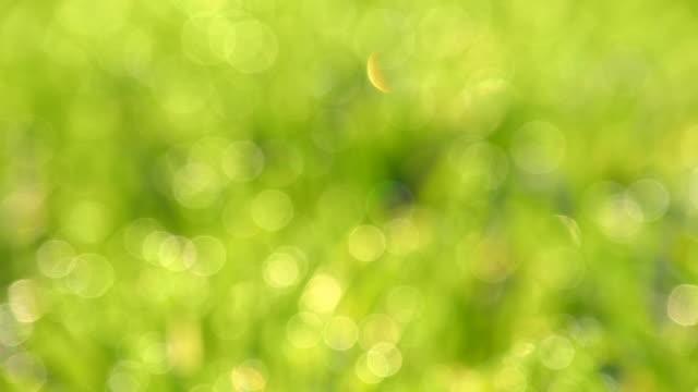 HD DOLLY: Bokeh Morgen Meadow