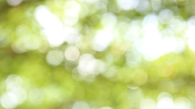 bokeh of light pass on tree in the wood - sunbeam stock videos & royalty-free footage