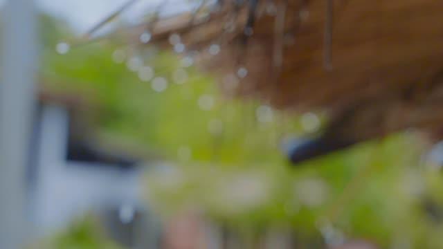 bokeh rain drop from leaves roof. - splashing droplet stock videos & royalty-free footage