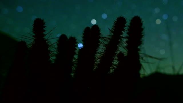 bokeh stars and macro cactus cacti at night silhouette dark sky - cactus silhouette stock videos & royalty-free footage