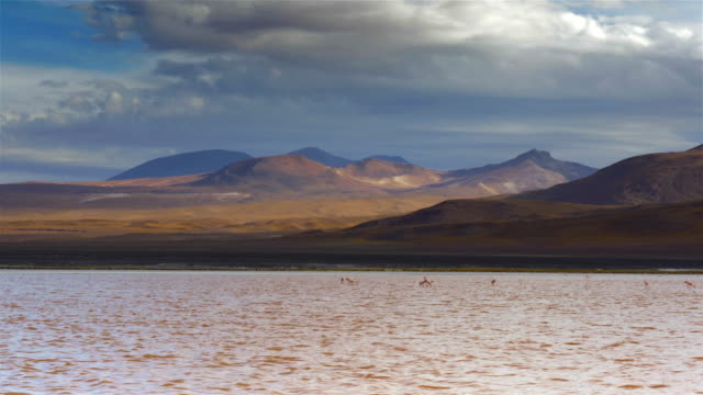 bolivian andes landscape with flamingos on a lake - bolivian andes stock videos & royalty-free footage