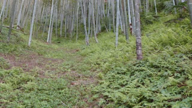 vídeos de stock, filmes e b-roll de floresta de bomboo - folha de bambu
