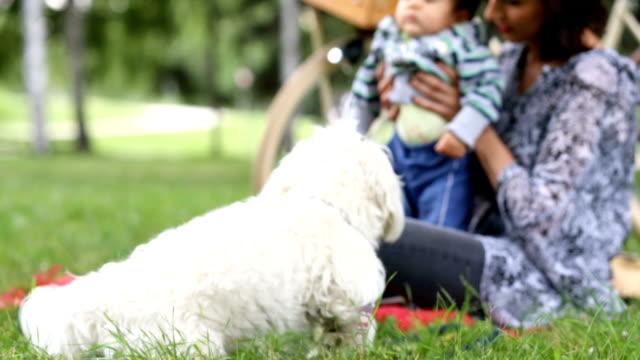 Verklebung auf Picknick-Tag
