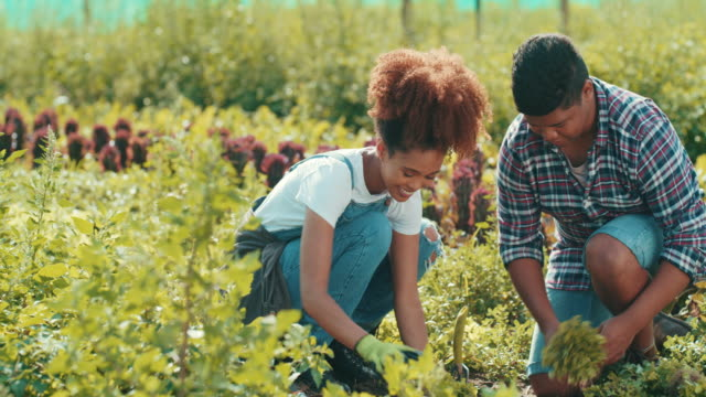 vídeos de stock, filmes e b-roll de unindo-se sobre nossas plantas - ranch