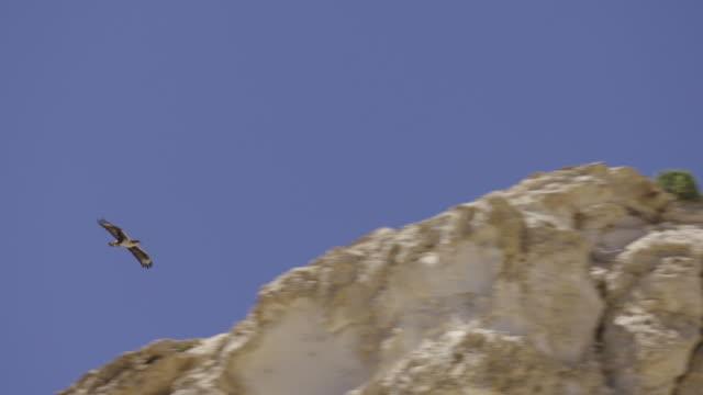 bonelli's eagle (aquila fasciata) - negev stock videos & royalty-free footage
