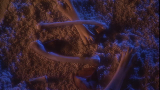 bones lie scattered on the sandy ground. - archaeology stock videos & royalty-free footage