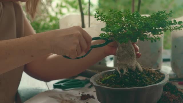 aktivitäten von bonsai tree - werkzeug stock-videos und b-roll-filmmaterial