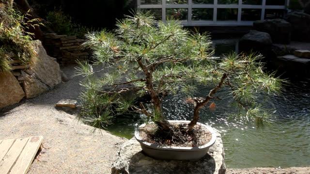 Bonsai tree in garden