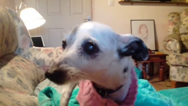 boo, who has been with this family for two years, was kicked in the head, resulting in a fractured jaw and nose, and the loss of all her teeth. plus... - haustierleine stock-videos und b-roll-filmmaterial
