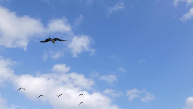 vídeos y material grabado en eventos de stock de piquero volando en el cielo en el océano pacífico - alcatraz patirrojo