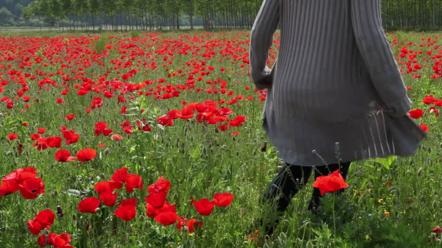 boom as woman walks into field of poppies, strokes blossoms - オニゲシ点の映像素材/bロール