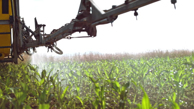 boom sprayer spraying young corn crops in the sunny field - spraying stock videos and b-roll footage