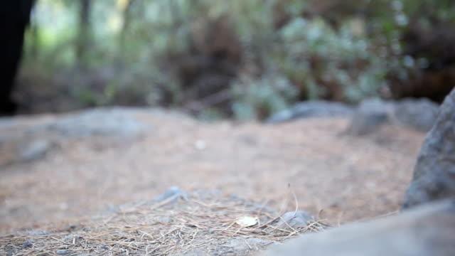 vídeos y material grabado en eventos de stock de cu de arranque de excursionismo - aguja parte de planta