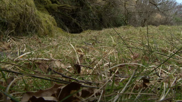 boots walking through grass by a forest - cut video transition stock videos & royalty-free footage