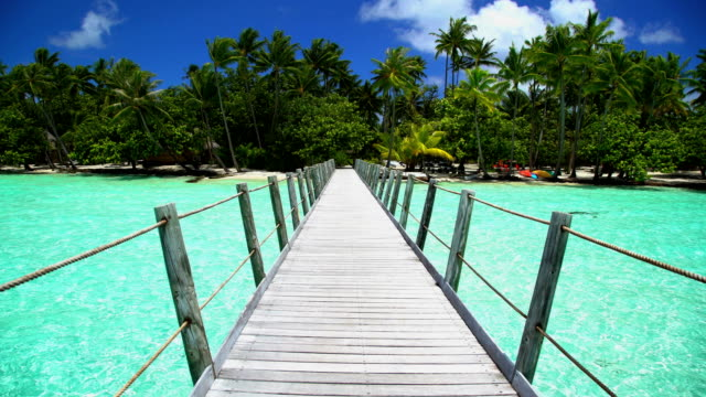 bora bora island boardwalk in tropical aquamarine lagoon - 顕花植物点の映像素材/bロール