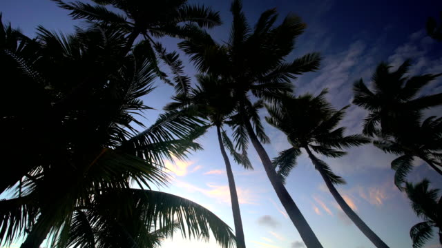 bora bora mt otemanu overwater bungalow at sunrise - polynesian ethnicity stock videos & royalty-free footage