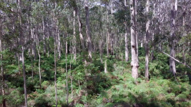 Boranup Forest Karri Trees