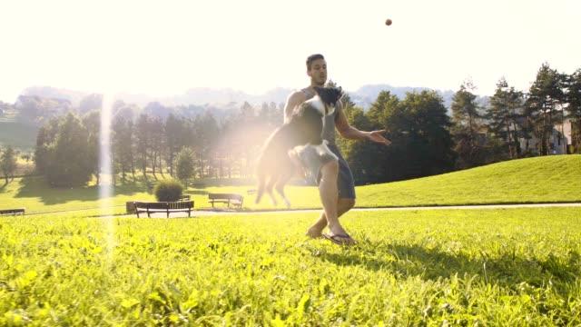 vídeos de stock, filmes e b-roll de slo mo collie fronteira salto alto para pegar uma bola - pegar