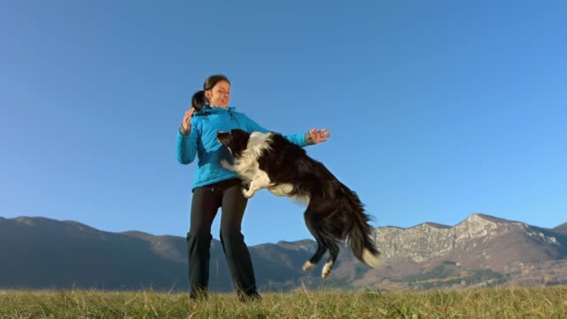 border collie jumping into arms - joy stock videos & royalty-free footage