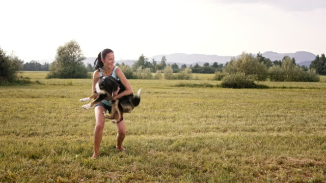 slo mo border collie jumping into his owner's arms - pet owner stock videos & royalty-free footage