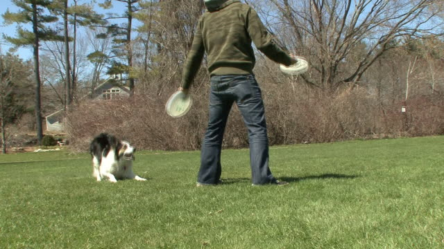 a border collie jumps off a man's back to catch a frisbee. - stunt stock videos & royalty-free footage