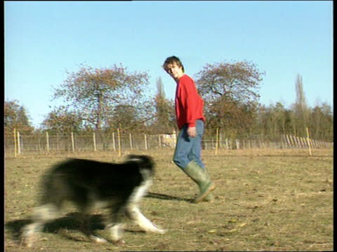 vídeos de stock, filmes e b-roll de border collie turkey dog cf tape no longer available england berks la lms nik miles standing as nick the turkeydog stands on hind legs being petted... - cão pastor