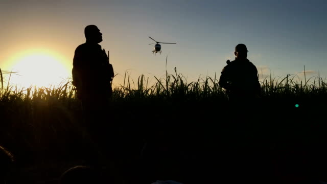 a us border patrol agent search for a group of undocumented immigrants hiding in a sugarcane field near the usmexico border on june 12 2018 near... - national border stock videos & royalty-free footage