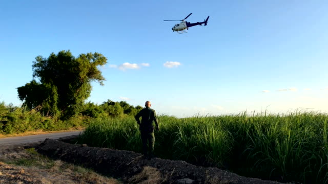 A US Border Patrol agent search for a group of undocumented immigrants hiding in a sugarcane field near the USMexico Border on June 12 2018 near...