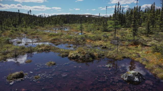 vidéos et rushes de boreal forest at trans-taiga road in northern quebec - province du québec