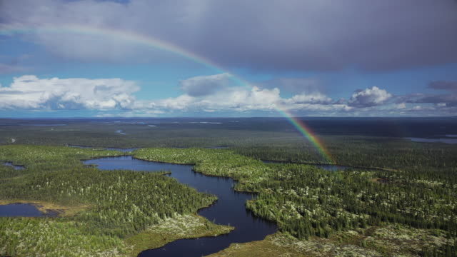 boreal forest at trans-taiga road in northern quebec - boreal forest stock videos & royalty-free footage