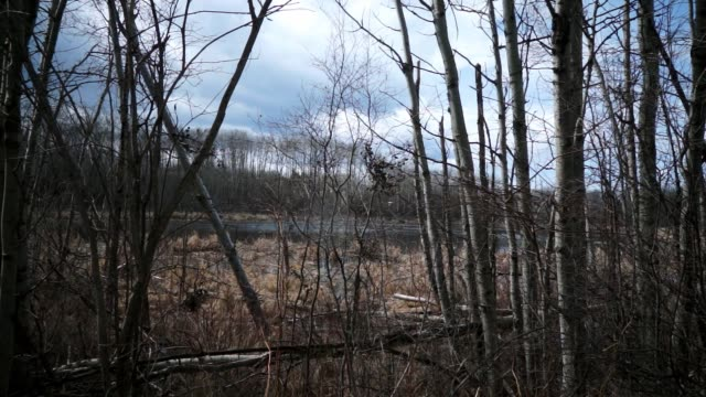 stockvideo's en b-roll-footage met boreal forest marsh after snow melt - kale boom