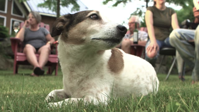 bored dog at party big family outdoor - domestic garden stock videos & royalty-free footage