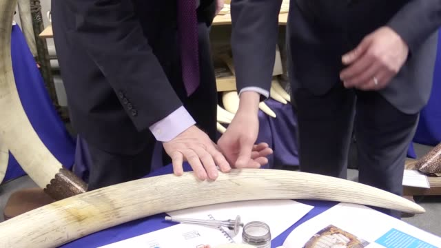 Boris Johnson expressed his concern of illegal wildlife products after seeing a haul of tusks stuffed big cats and monkey hands seized by police The...