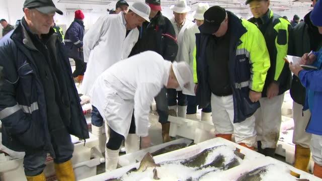 boris johnson visiting a fish market - fish stock videos & royalty-free footage
