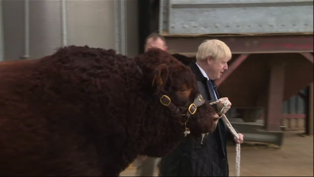 boris johnson walking a bull on a visit to a farm - animal pen stock videos & royalty-free footage