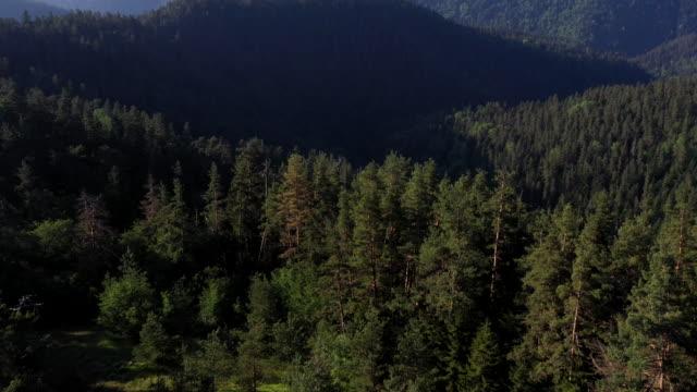 vídeos de stock e filmes b-roll de borjomi kharagauli national park, georgia - reserva selvagem