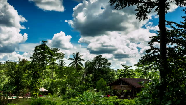 borneo jungle landscape sabah time lapse - island of borneo stock videos and b-roll footage