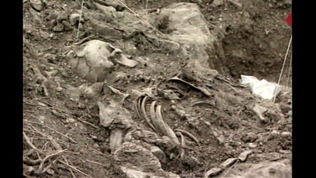 bosnian serb wartime general ratko mladic arrested; tx 10.7.1996 bone and skeletons in mass grave site - ratko mladic stock videos & royalty-free footage