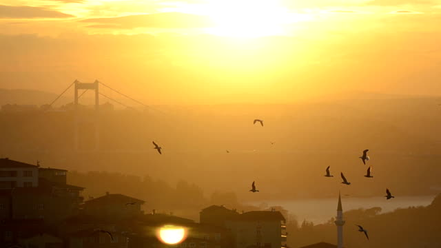 hd: bosphorus bridge - bosphorus stock videos & royalty-free footage