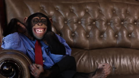 boss chimp big smile - monkey stock videos & royalty-free footage