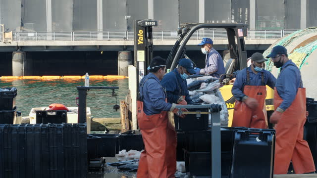 boston, ma, usa - oct. 22nd, 2020: workers wearing face mask separating and packing fish at the pier of boston amid the 2020 global coronavirus... - hose stock-videos und b-roll-filmmaterial