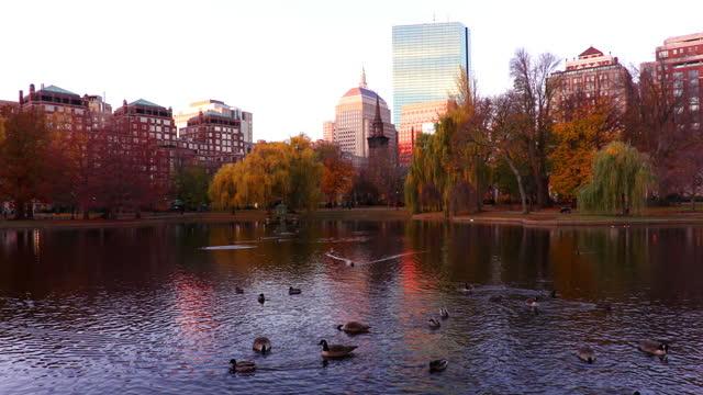 boston public garden - back bay boston stock videos & royalty-free footage