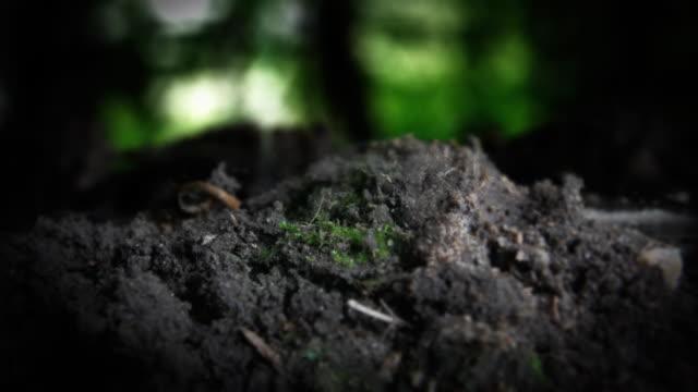 vidéos et rushes de a bot fly flies away from soil. - insecte
